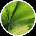 Wyciąg z palmy sabałowej