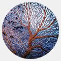 Wyciąg z koralowca gorgonia